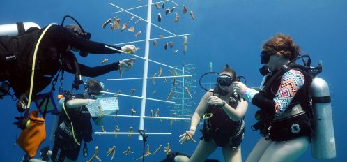 Coral Reef Research Internship