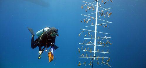 Coral Reef Research Internship