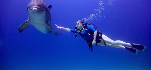 Girl diver touching dolphin on the dolphin dive at Anthony's Key Resort.