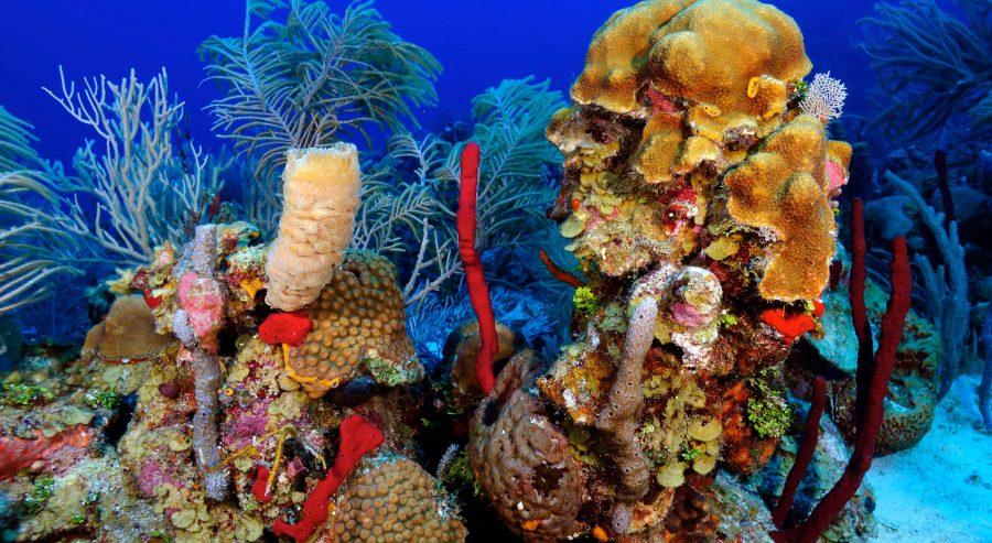 Roatan Reef