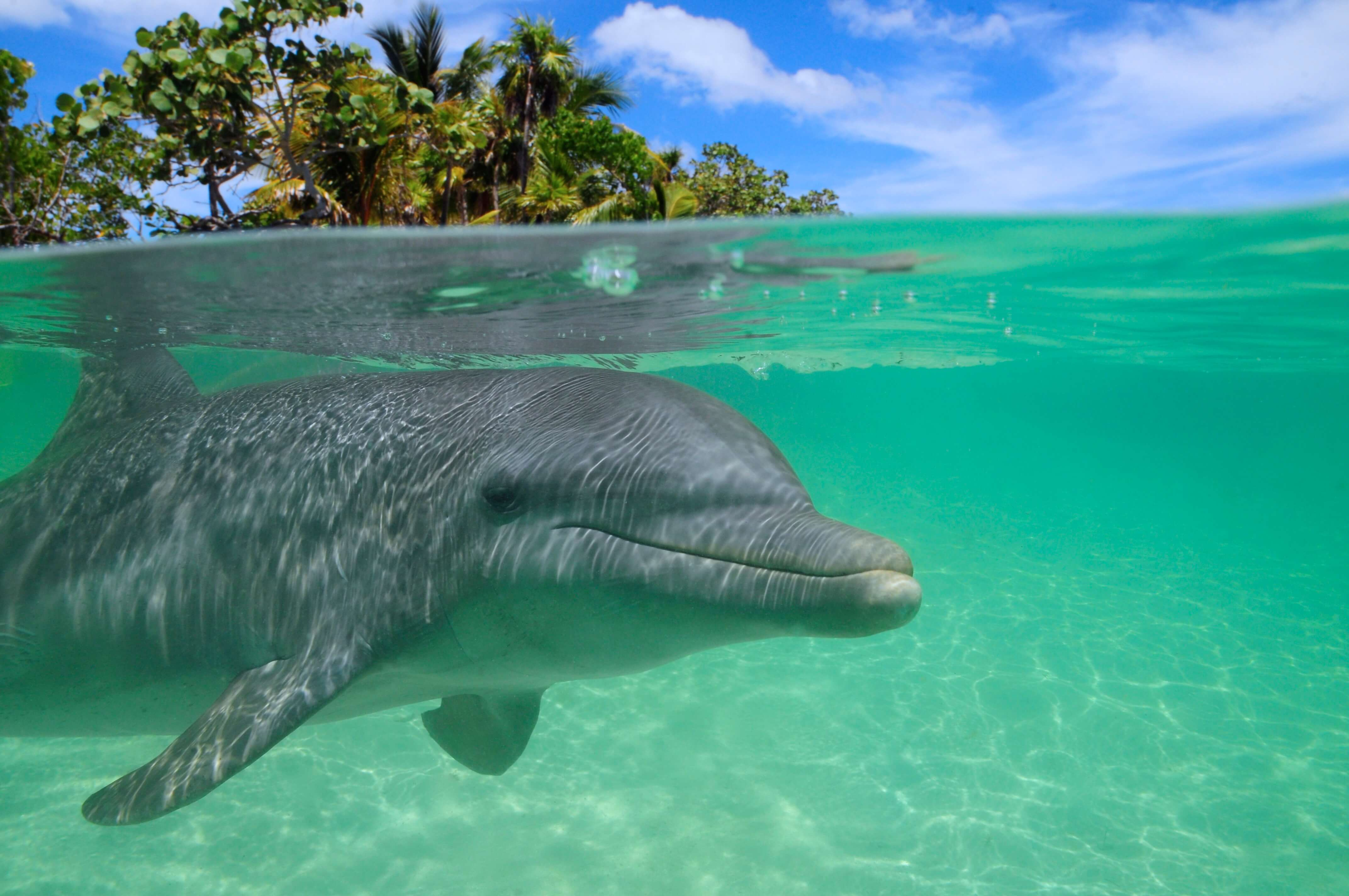 Dolphin swim and snorkel.