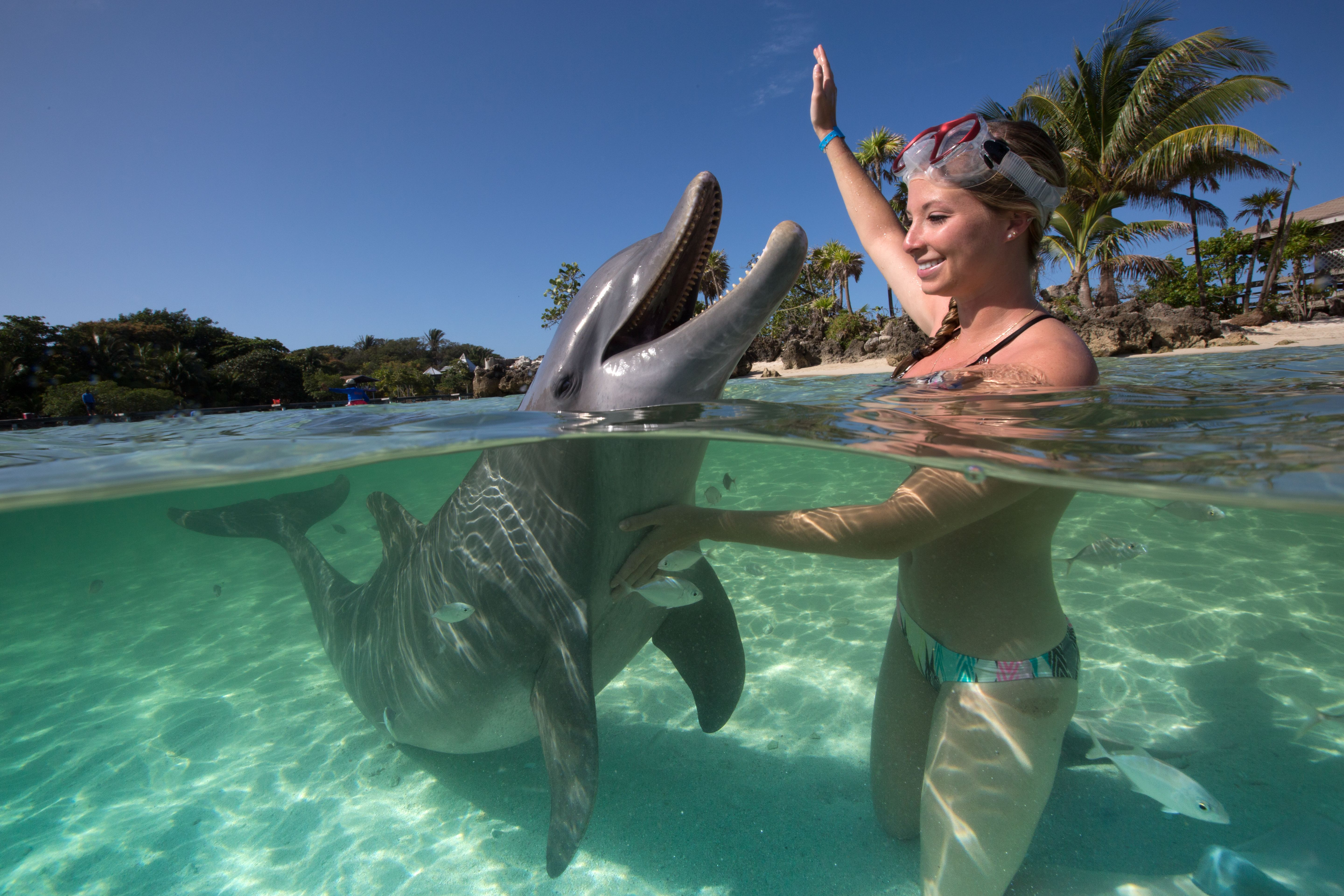 Girl with a Dolphin.