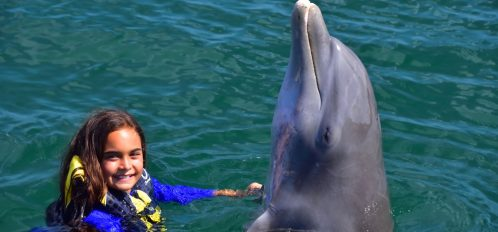 Dolphin and girl during dolphin camp.