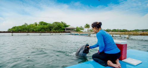 Dolphin Training & Research Internship