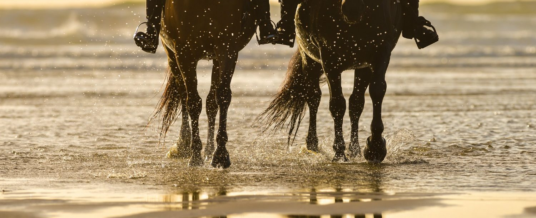 Horseback riding on Roatan
