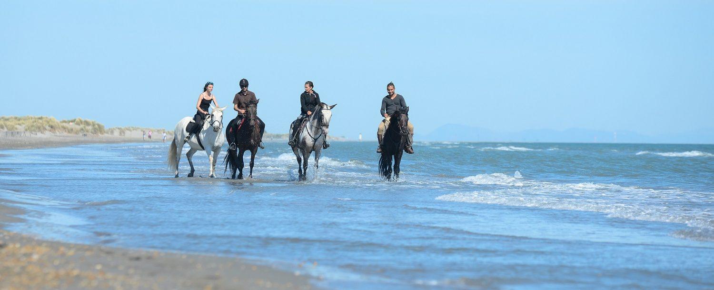 group riding horseback on roatan
