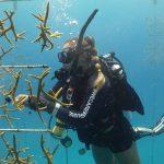 coral nursery program