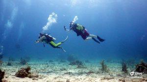 anthonys key divers underwater