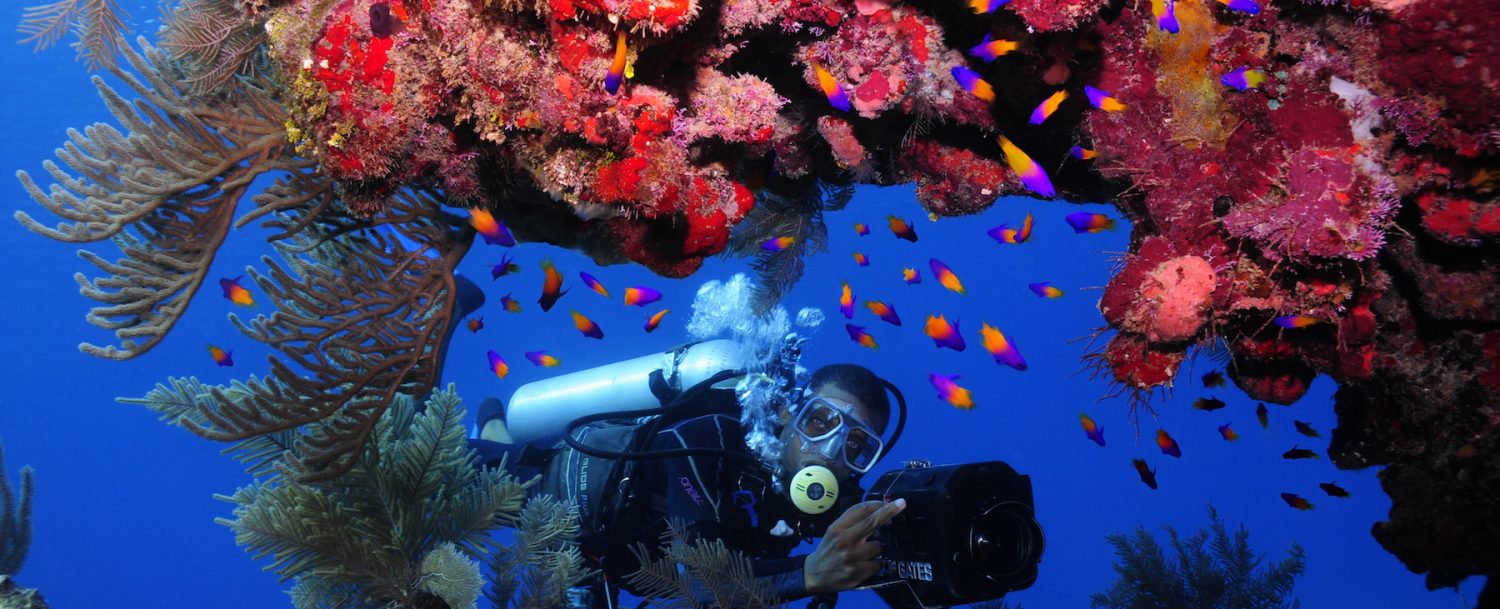 Anthony's Key Resort dive underwater beautiful coral reefs naturally preserved