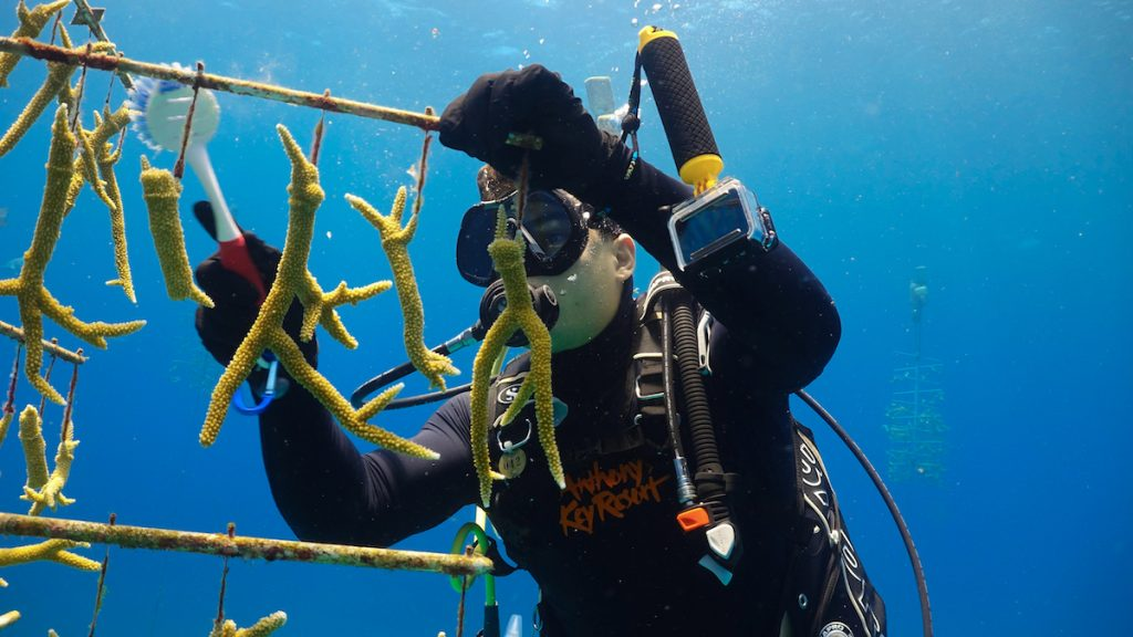 Coral Nursery Tree Maintenance for World Oceans Day
